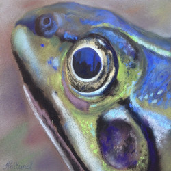 Reflet dans l'oeil de la grenouille