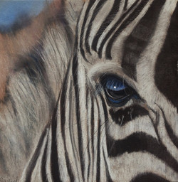 ¨ Zebra ¨