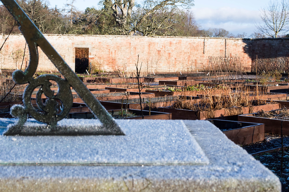 Colstoun Walled Garden in January 2017