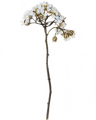 Canva - Hand Pressed Flora (6).png