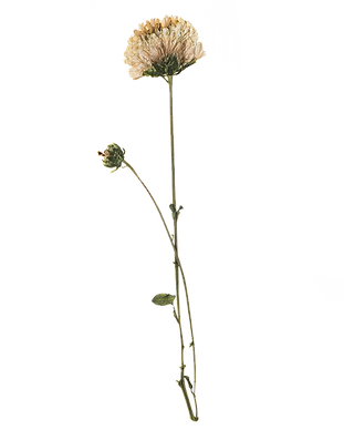 Canva - Hand Pressed Flora (5).png