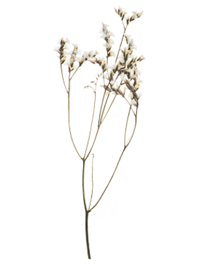 Hand-Pressed-Flora-2.png