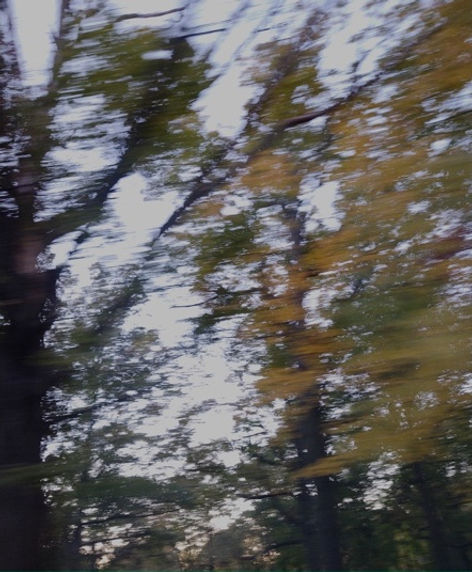 Drive By Trees 4