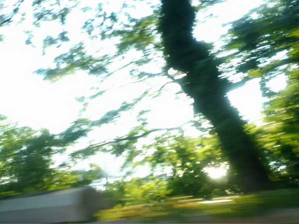 Drive By Trees