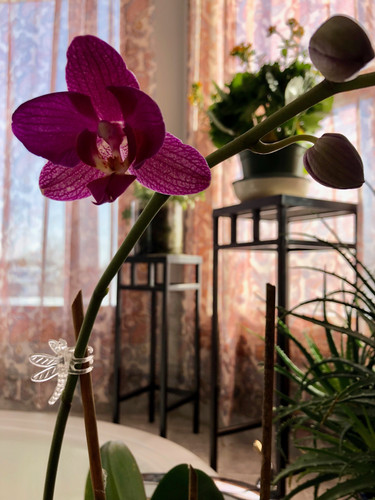Orchid's First Bloom