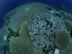 Une réserve marine souhaitée aux Australes : Rahui Nui
