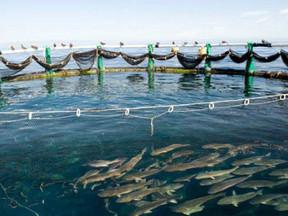 Aquaculture aux Tuamotu : un impact environnemental toujours méconnu