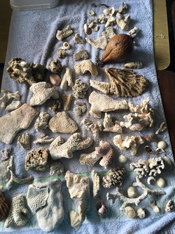 AME Punaauia coraux