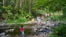 Abattage des arbres en bordure des rivières
