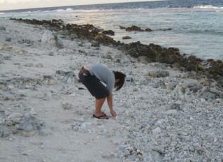 Les nouveaux coquillages des Tuamotu