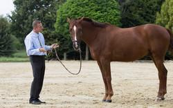 Pferd & Manager 1
