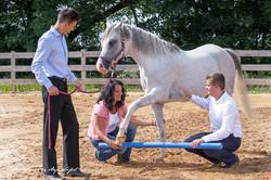 Pferd mit Team