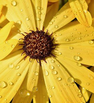flower-4217683_1920.jpg