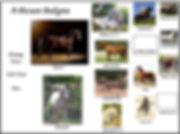 picture pedigree for shanah.jpg
