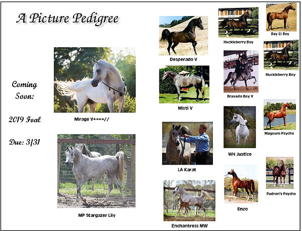 pedigree lily and mirage corr c.jpg