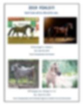 sandy 2019 possible foals4.jpg