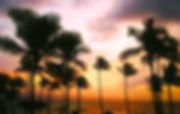 hawaii-1945486_960_720.jpg