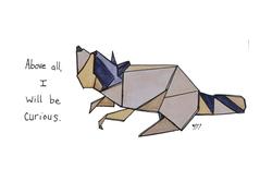 raccoon color.png