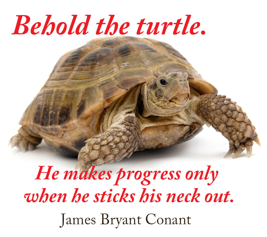 Behold the turtle. He makes progress only when he sticks his neck out.