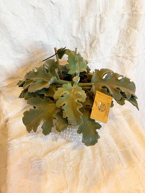 Plantes vertes sans cache pot