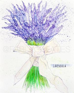 Lavender Bundle.