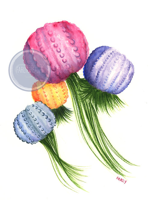 Jellyfish Air Plants