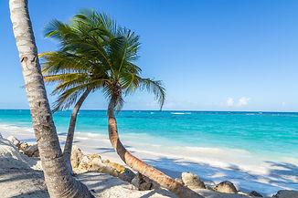 palmier-punta-cana1.jpg
