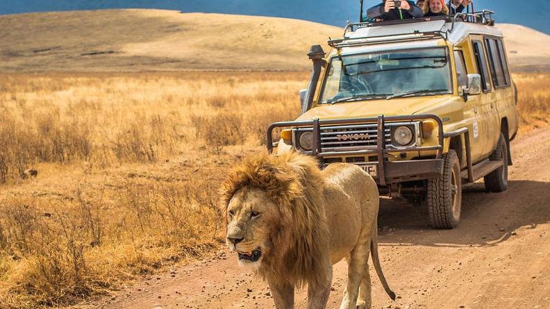 safari-tanzania-950x534.jpg