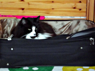 Squeaks is going on Holiday!