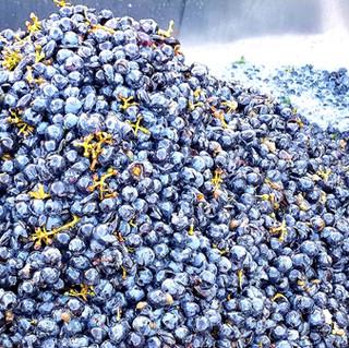 grapescrushed.jpg