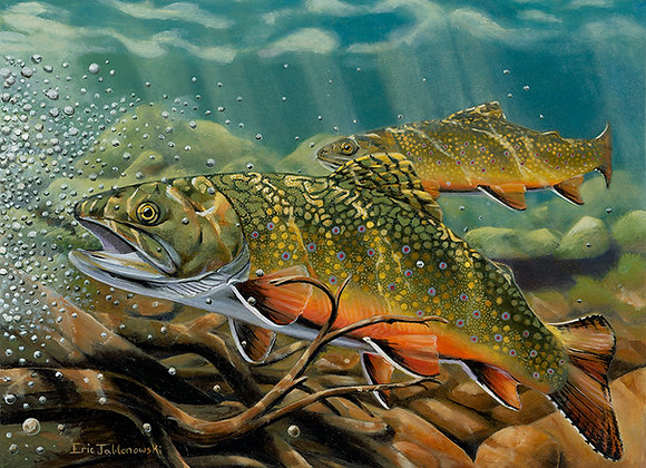 Feeding Frenzy (2018 Delaware Trout Stamp)
