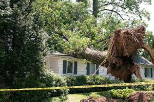 treefail.jpg