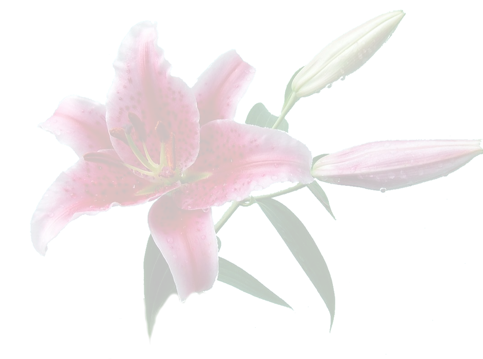 Lily%20Cut%20Out%20-%20crop%20fade_edite