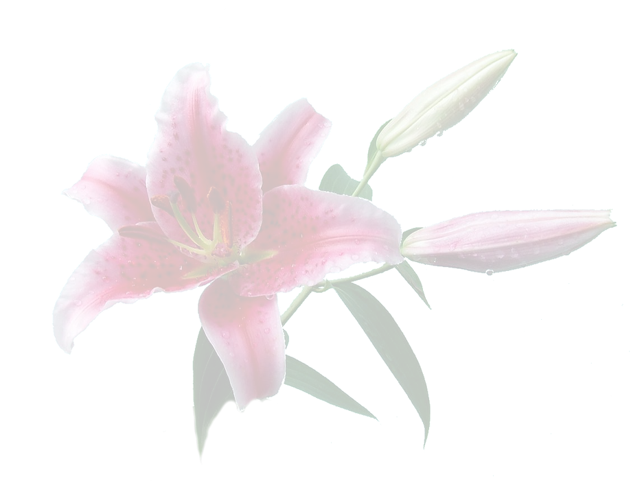 Lily Cut Out - crop fade.png