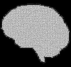 brain-2750458_edited.png