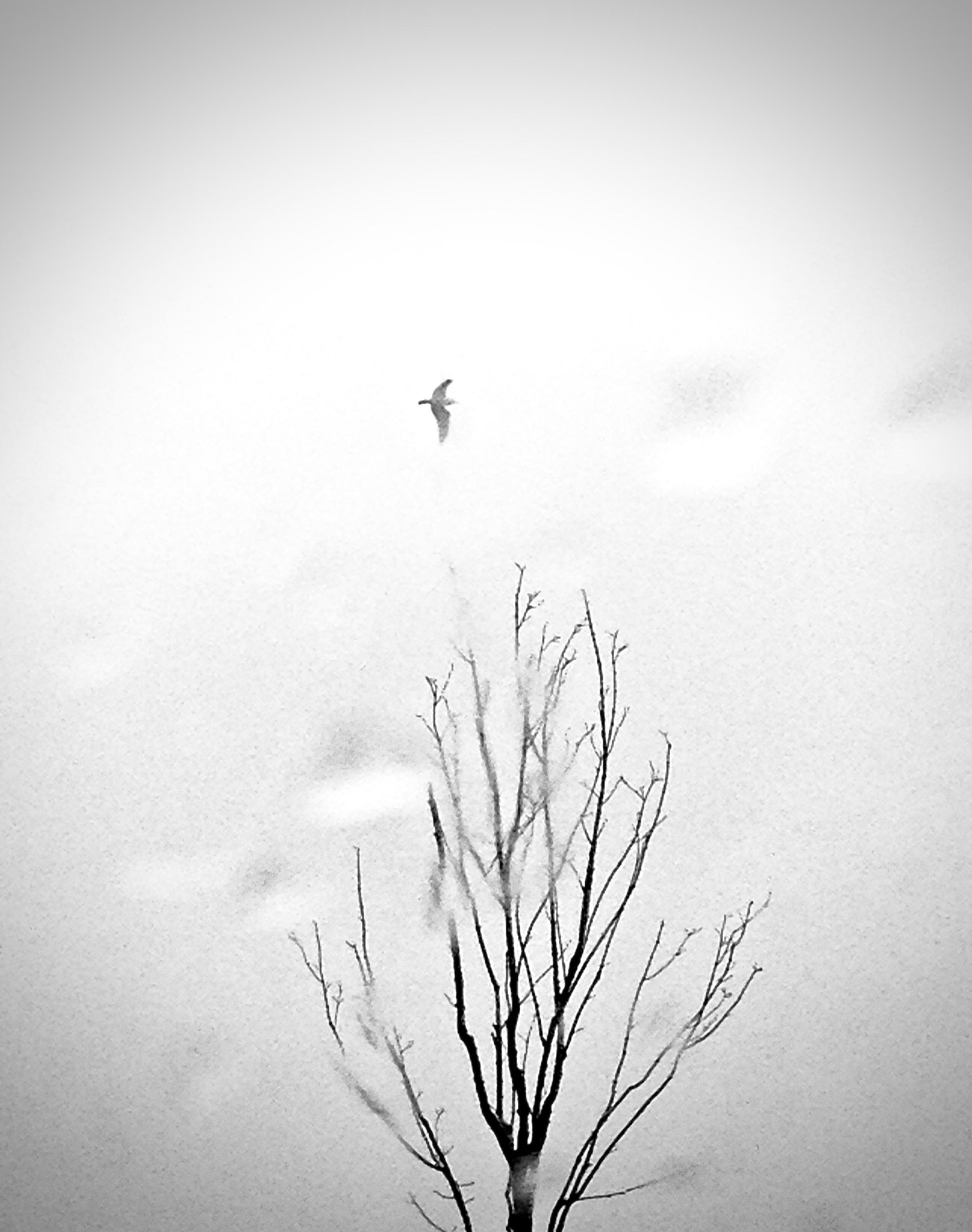 Rain Tree Gull