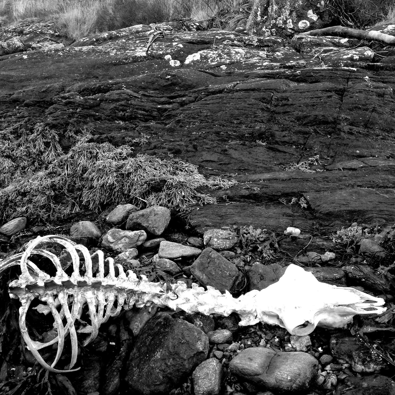 Beached Bones