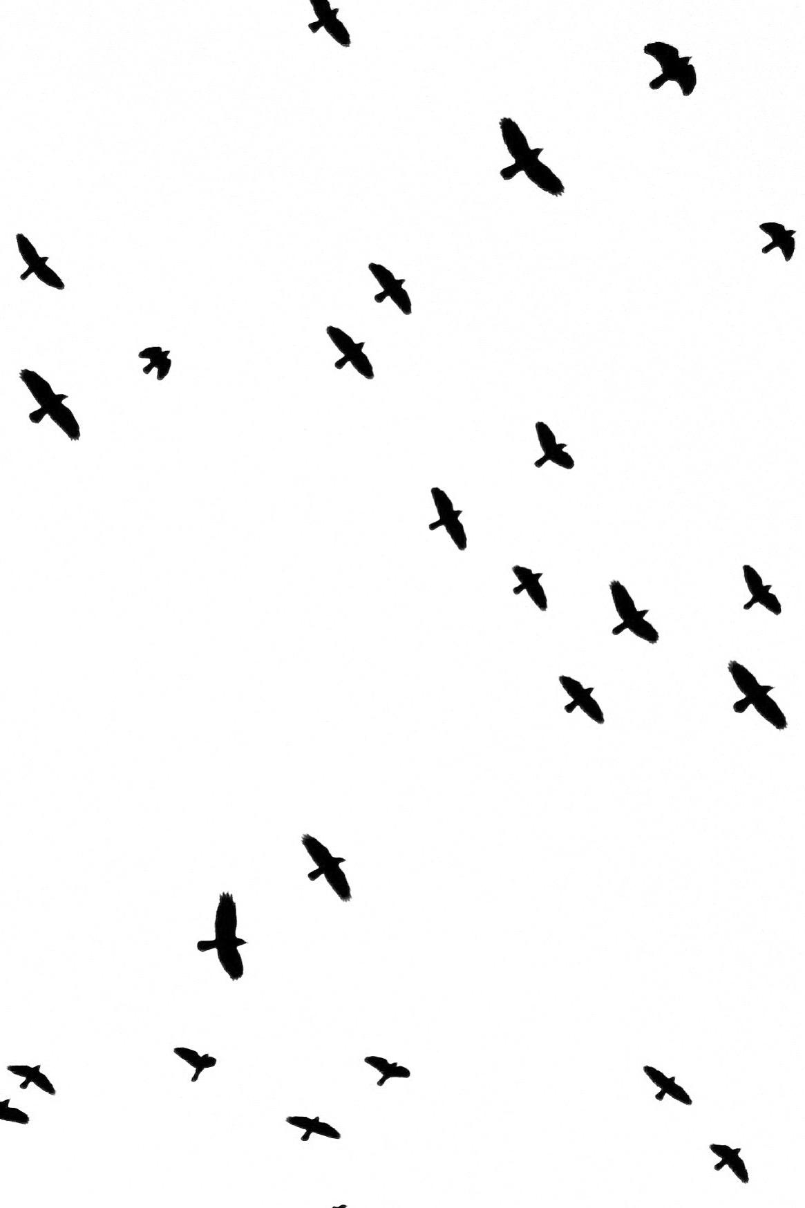 Crow Time