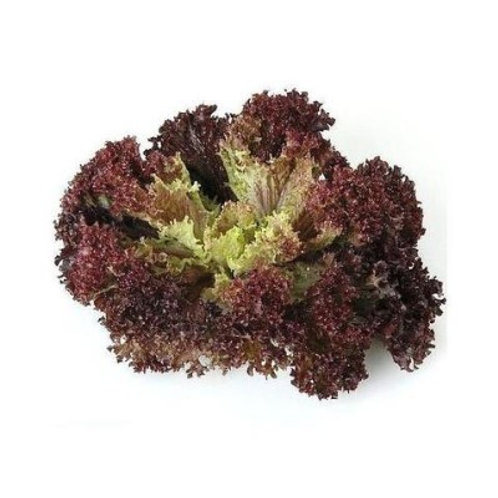 RED CORAL LETTUCE (pack) [±200g]