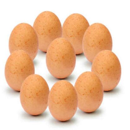 Egg (10pcs)