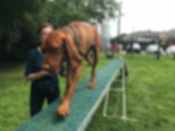 Daphne agility dogwalk.jpg