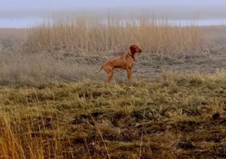 Ollie in Marsh watching Ospreys_10 mos.j