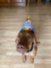 winnieturns1a.jpg