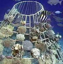 ReefArtfcl2.png