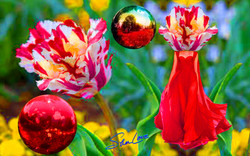 Tulip Gazing Sher Love Collage