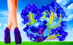 Blue Tulip Strolling Sher Love Collage