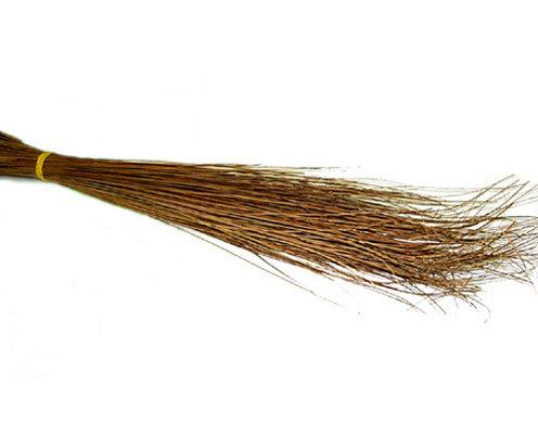 Broomstick (Walis Tingting)