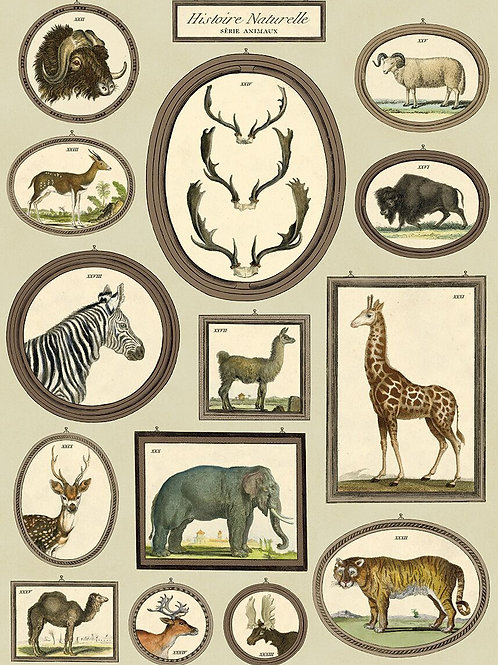 Safari Animals - Histoire Naturelle