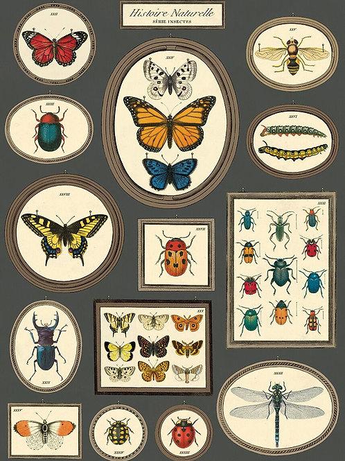 Butterfly & Bugs - Histoire Naturelle