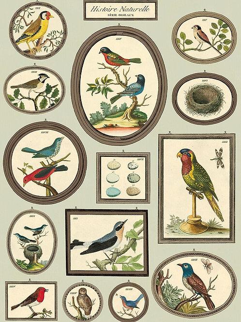 Birds - Histoire Naturelle